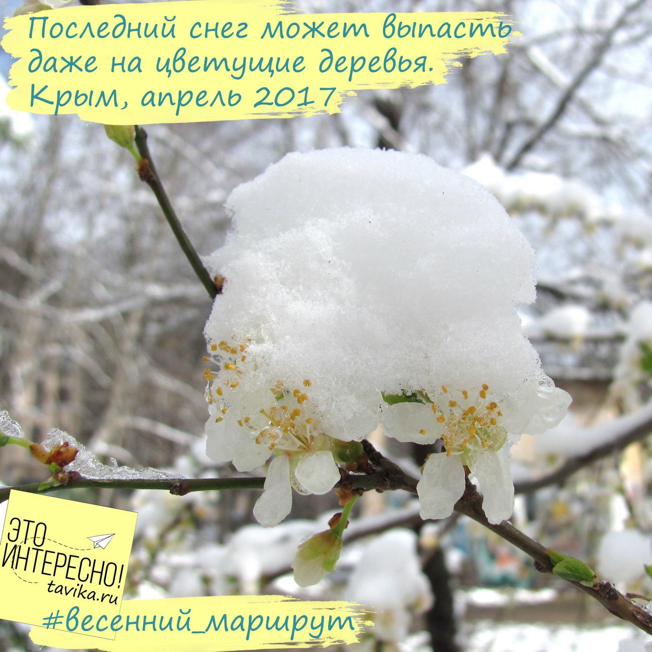 Последние  весенние заморозки в Крыму