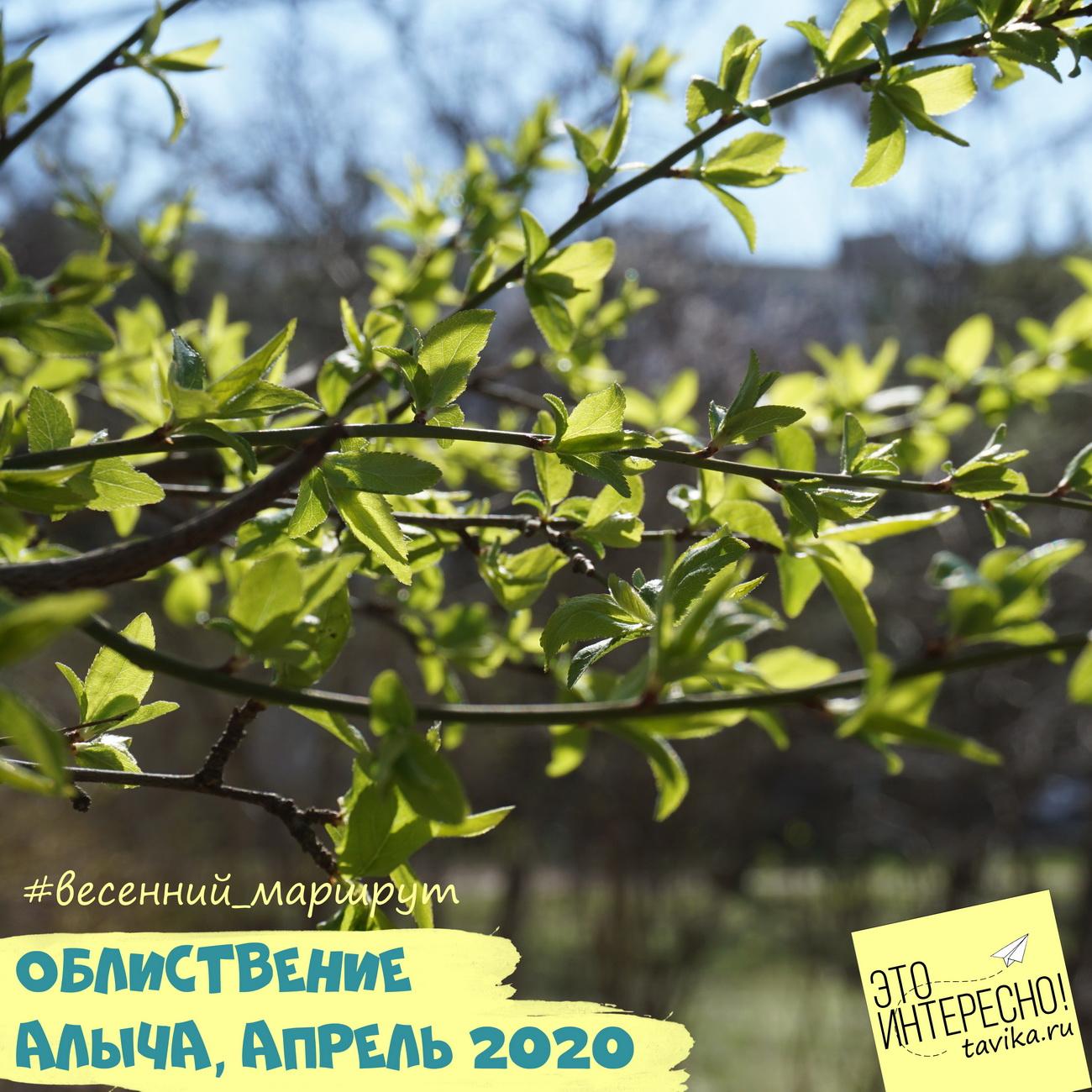 фаза конца цветения у деревьев
