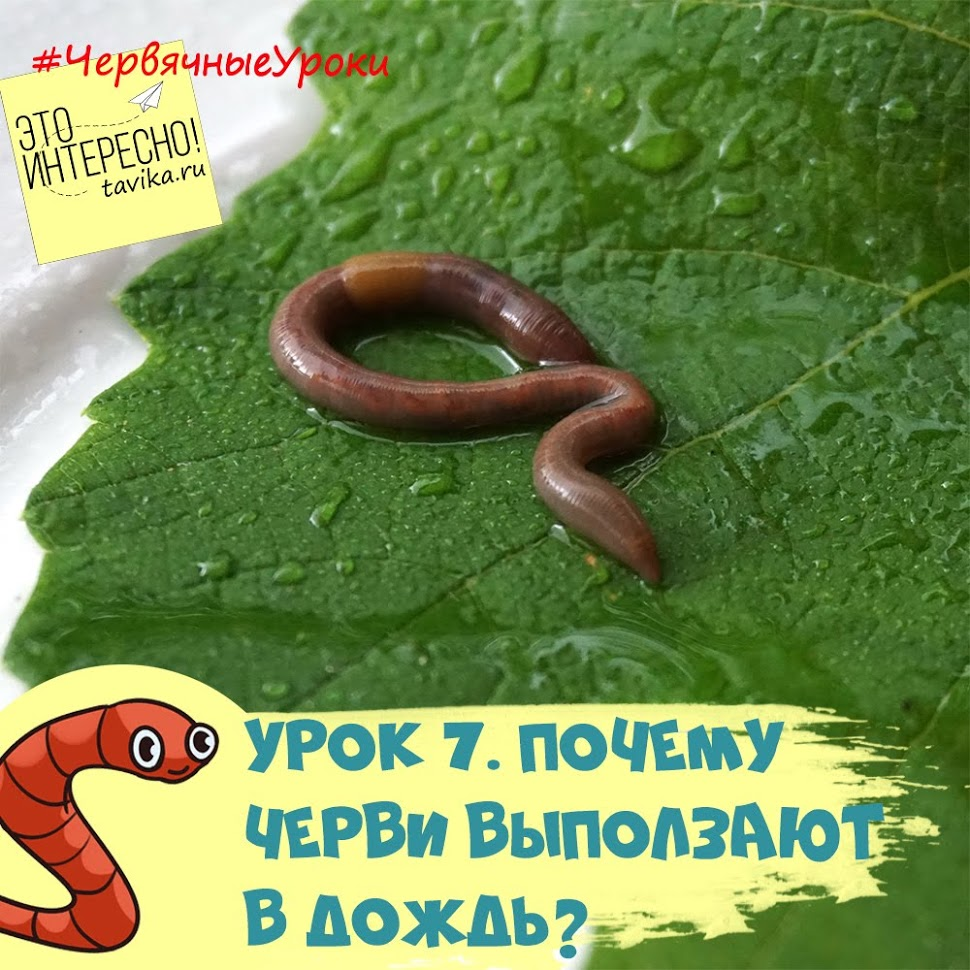 образ жизни дождевых червей - занятие по биологии для детей