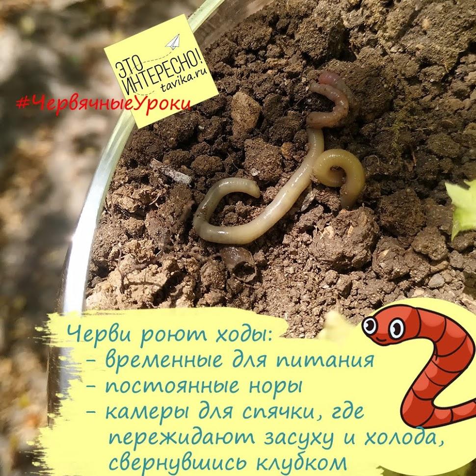 виды ходов дождевых червей