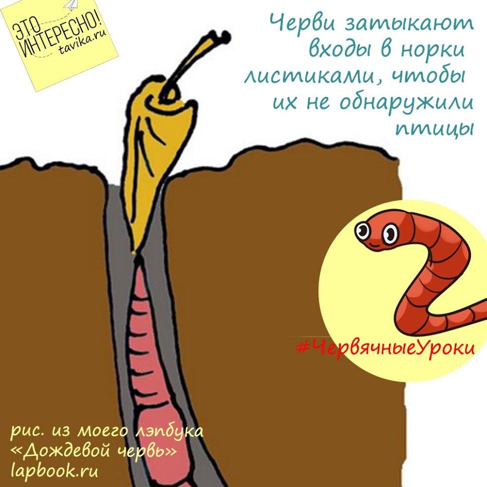 червь закрывает вход в нору листиком