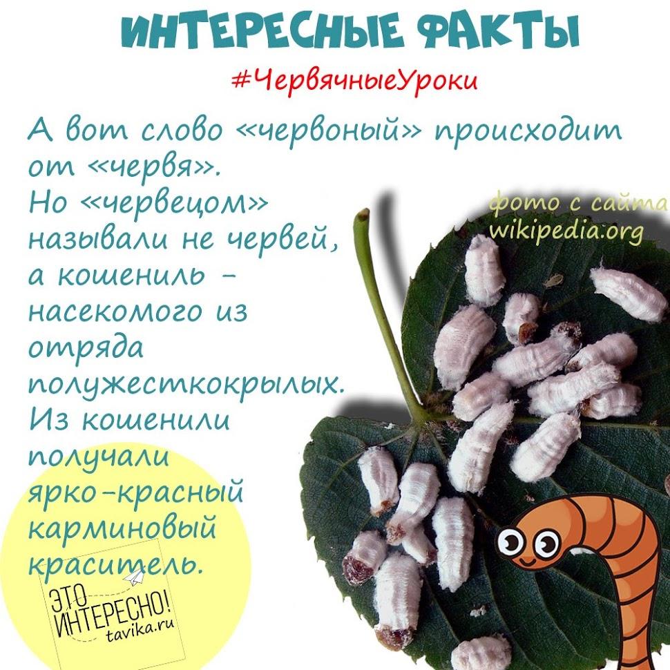 интересные факты про дождевых червей для детей